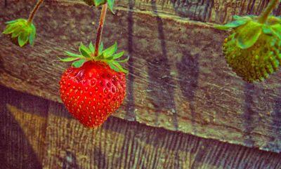 summerslaststrawberry-filtered